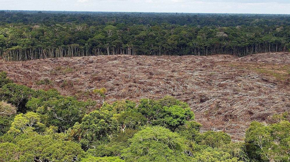 Amazonia-talas